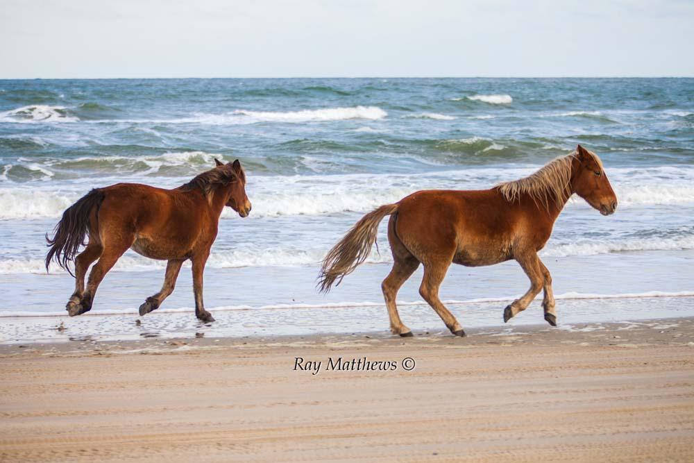Horses 2013-12