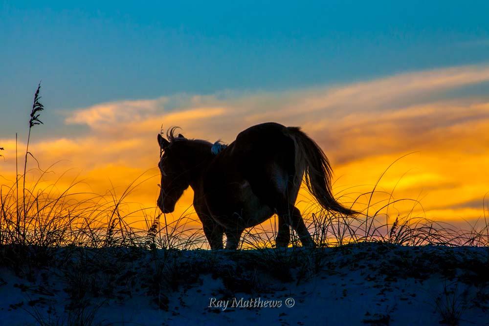 Horses 2014-220
